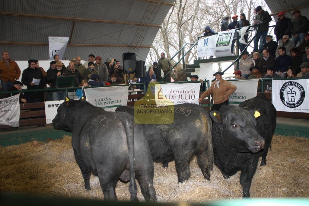 Pagaron hasta $ 53.000 por toros en Saladillo