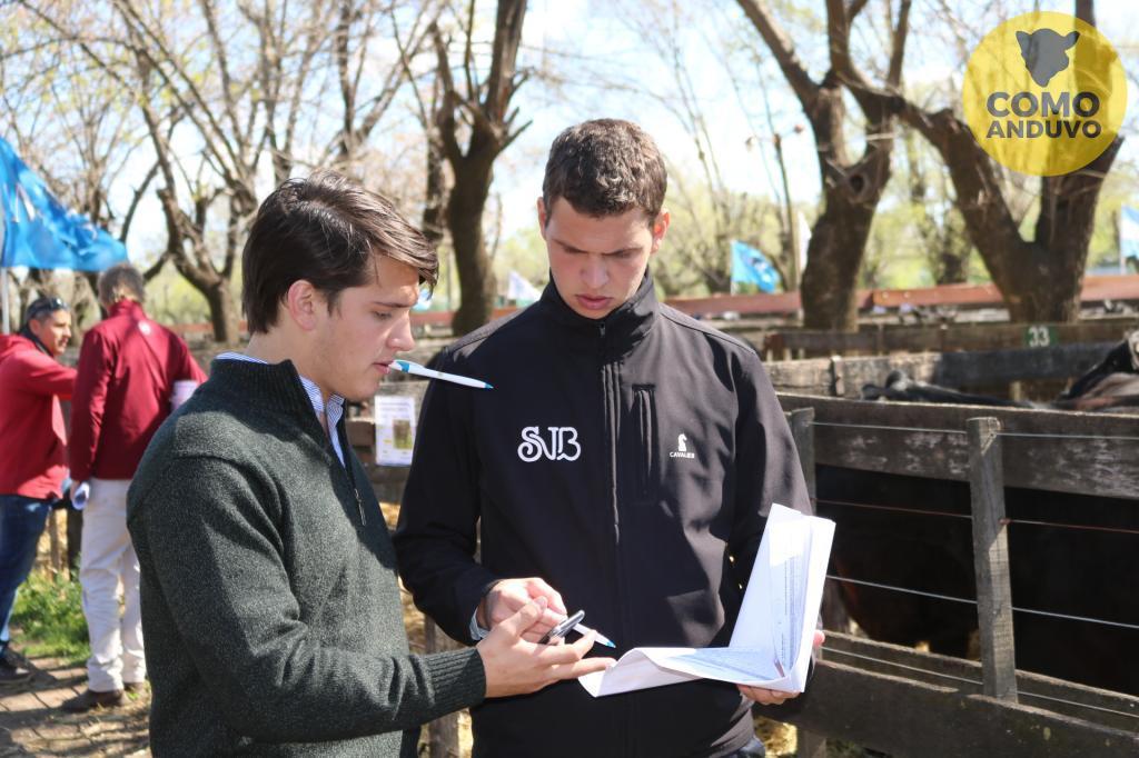 Matteucci & Bardín