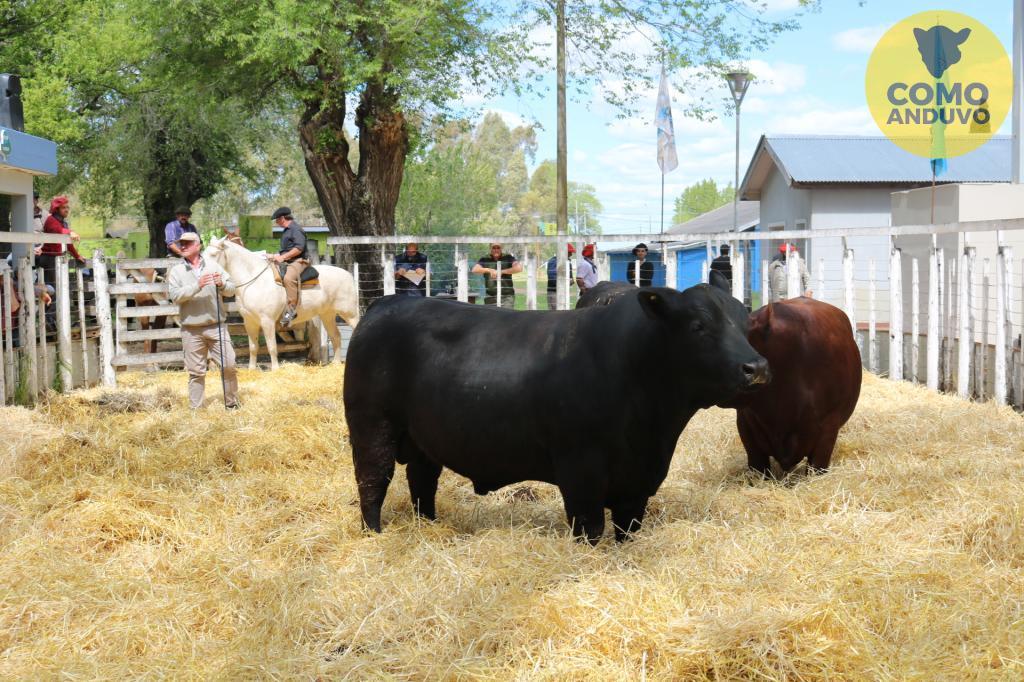 Exp. Soc. Rural de Olavarría