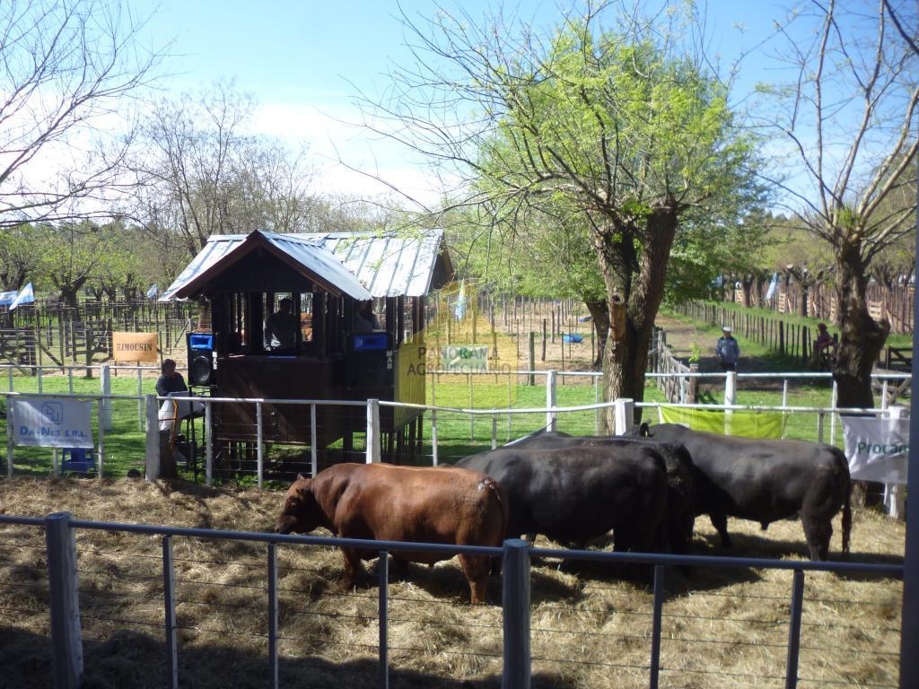 Exp. Soc. Rural de Tapalqué