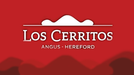 Los Cerritos - Angus - Hereford